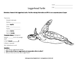 Research the Loggerhead Turtle