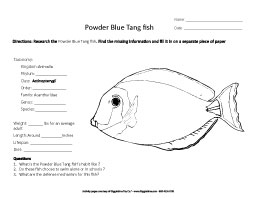 Research the Powder Blue Tangfish